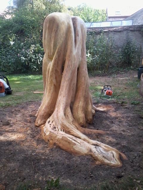 Prunus Padus (faceB)